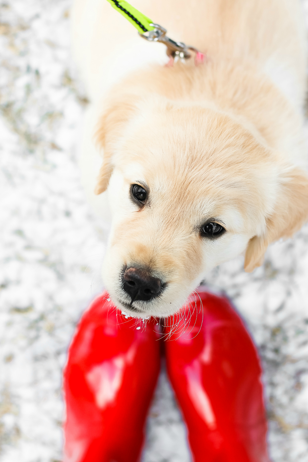 Best Dog Food For  Month Old Puppy