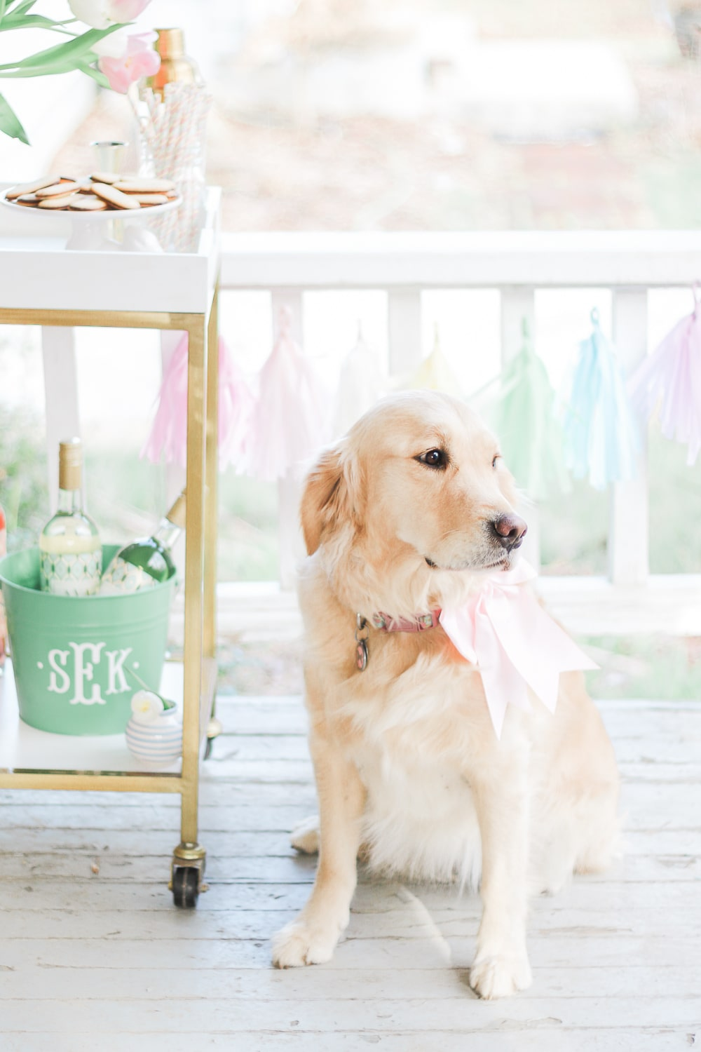 Golden retriever with a pink bow on Diary of a Debutante