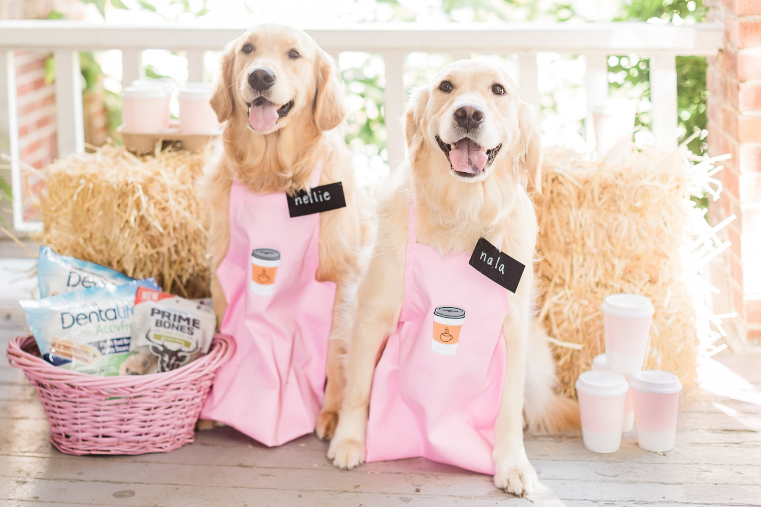 One of the cutest DIY golden retriever dog costumes ever designed by dog mom and blogger Stephanie Ziajka on Diary of a Debutante
