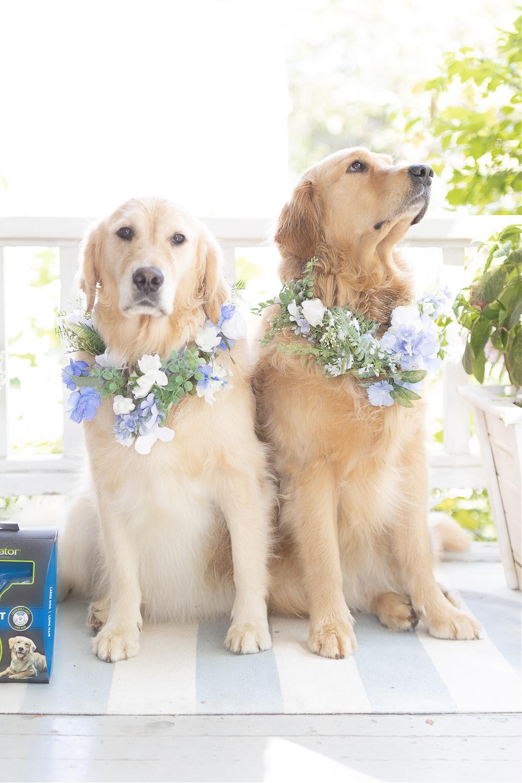 DIY dog flower collar wedding tutorial by blogger Stephanie Ziajka on Diary of a Debutante